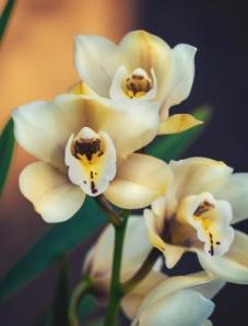 Lan Hồ Điệp Thượng Hạng | BAB Orchids