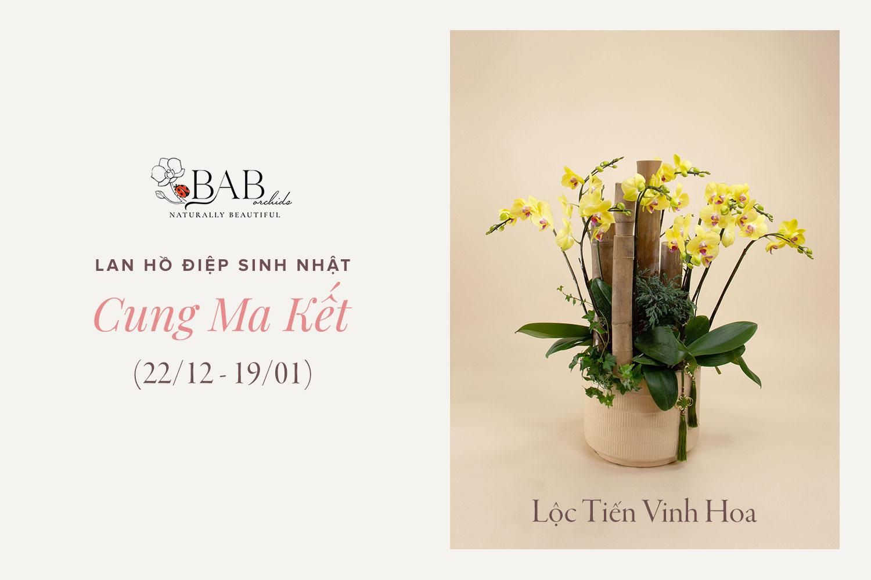 12 cung Hoàng Đạo hợp với mẫu hoa Lan sinh nhật nào?