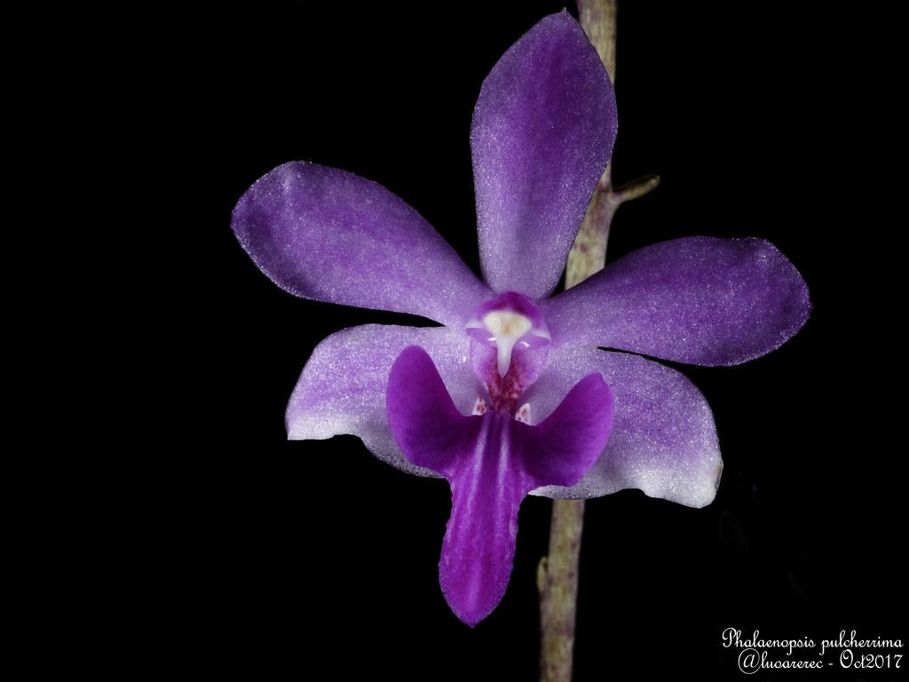 Bạn có biết hết 9 loài Lan Hồ Điệp tuyệt đẹp này?