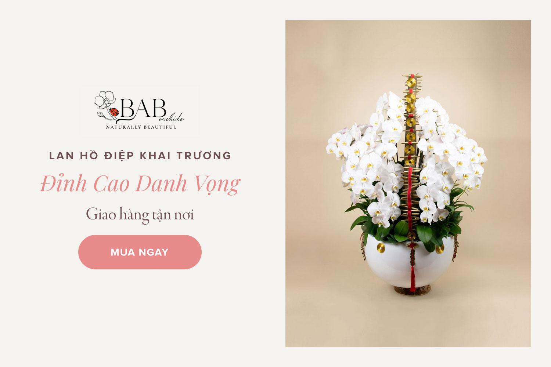 7 mẫu hoa Lan Hồ Điệp khai trương đẹp và ý nghĩa